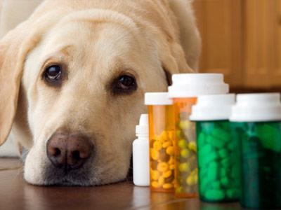 Pet Choice Pharmacy